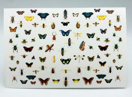 Слайдер-дизайн Entomologie by Provocative nails