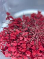 Сухоцветы №2 (красные)