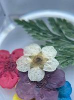 Сухоцветы №11 (крупные цветки)