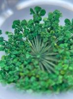 Сухоцветы №4 (зеленые)