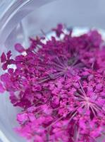 Сухоцветы №9 (фуксия)