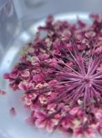 Сухоцветы №10 (темно-розовые)
